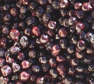 Saskatoon Berry Jam: The Traditional Recipe - A Canadian Foodie