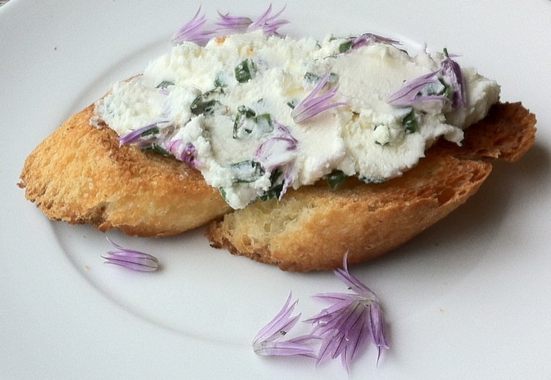 Homemade chevre with chive blossoms