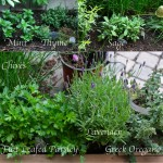 June-2012-Garden-Collage-1