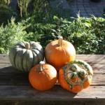 Prairie Garden Harvest from Prairie Gardens Farm for Thanksgiving
