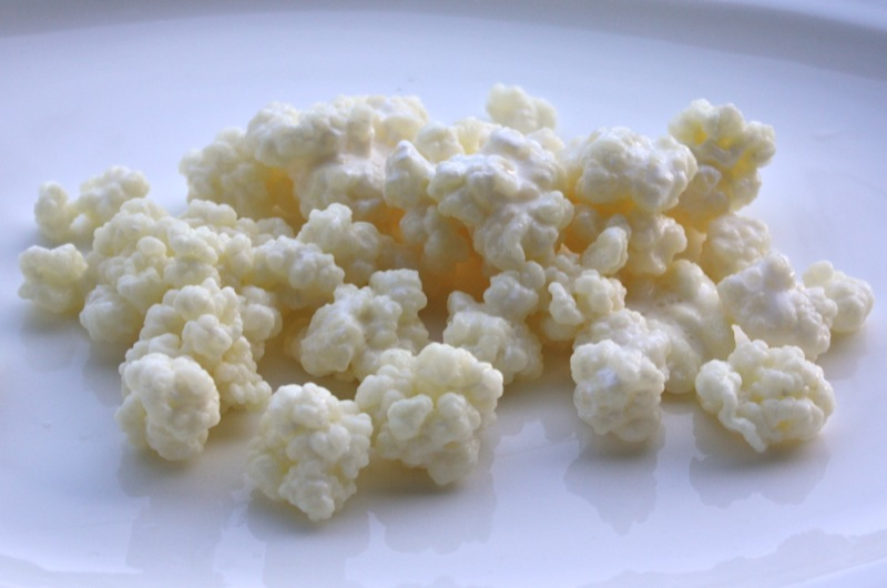 kefir grains. a friend gave these to me and told put them into milk. do you know what they are? kefir grains