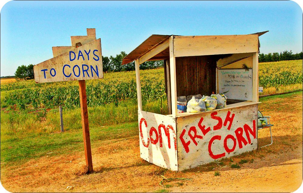 Kathryne G morden corn.jpg