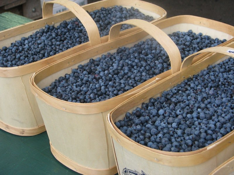 My Cookbook Addiction Bushels-of-Blueberries
