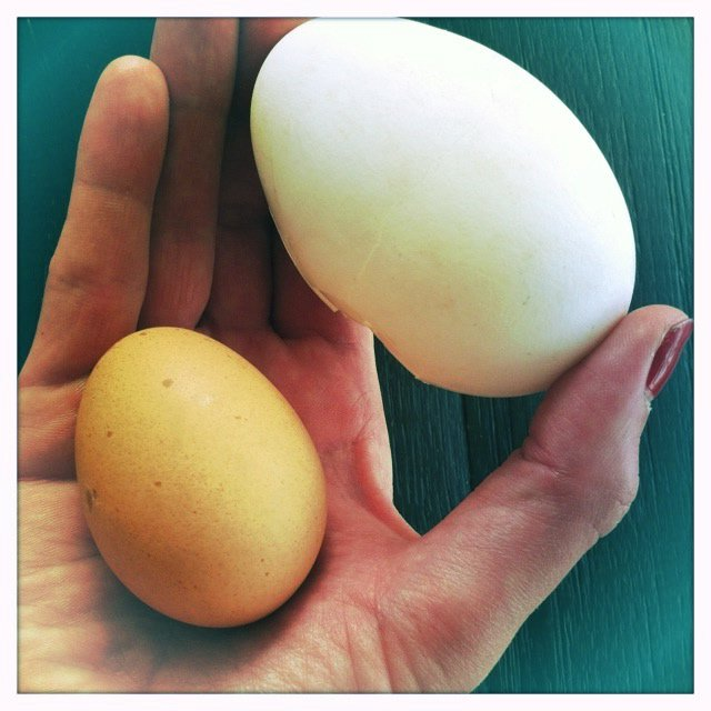 megan goose egg