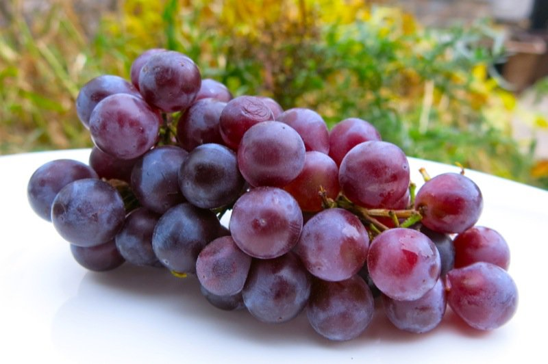 classic preparation of concord grapes