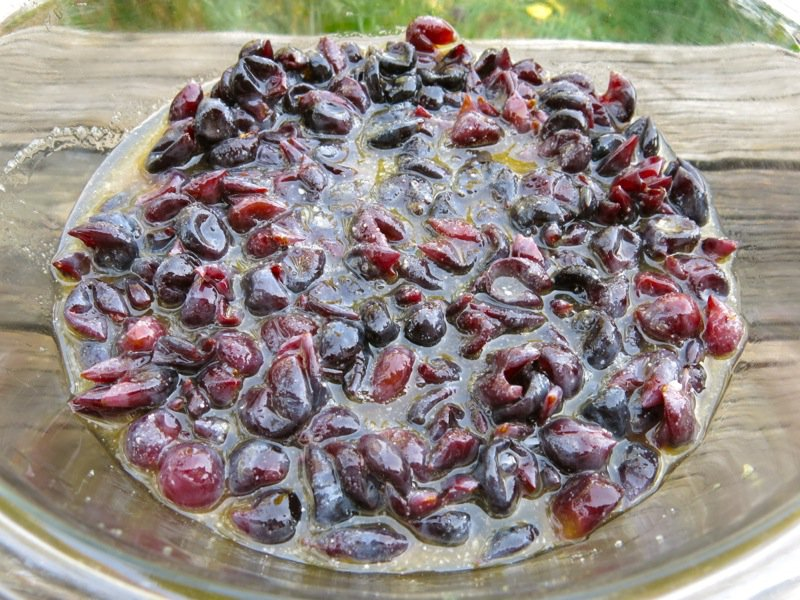 Concord Grapes Skins with Prepared Pulp 2