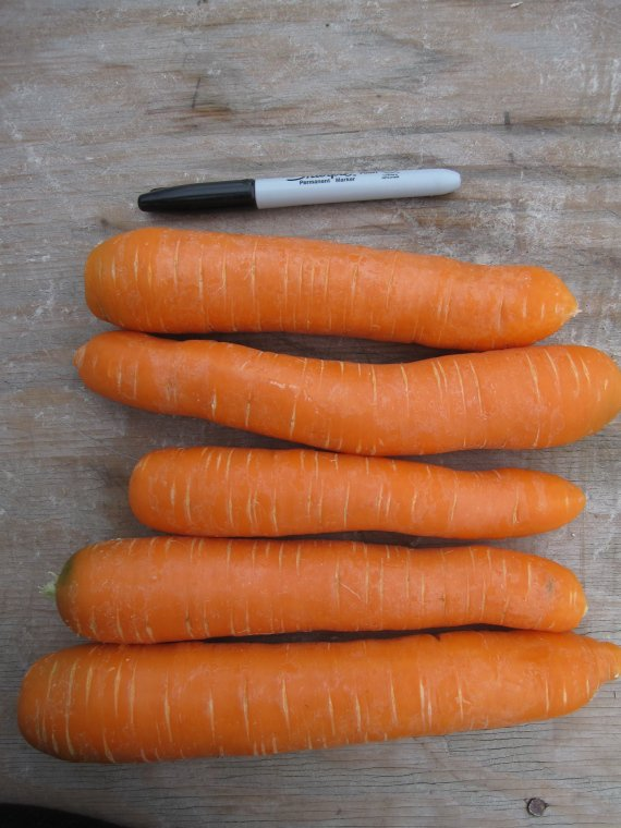 Ashley Canadian Carrots