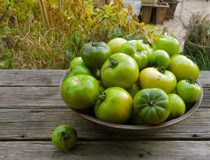 Green Tomatoes in Bowl