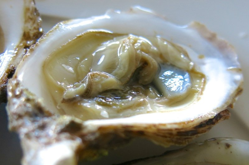 2 Malepeque Oyster on half shell