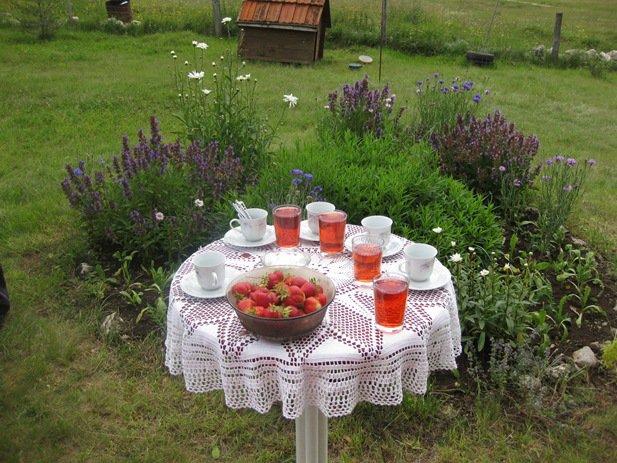 17 July 8 2009 Kupress Strawberry Tea
