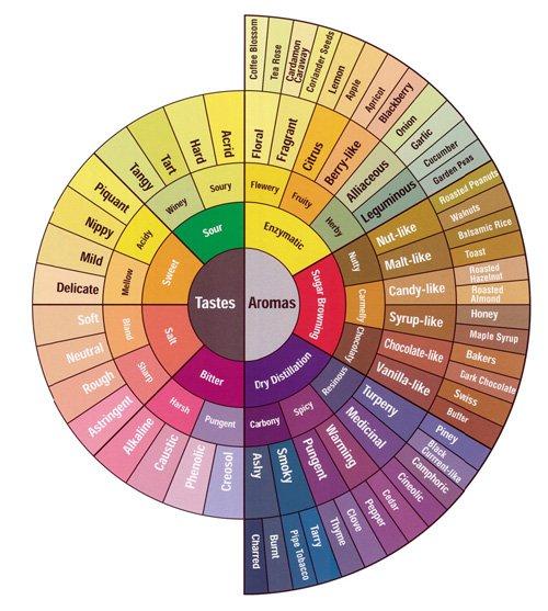 taste_and_flavor_wheel