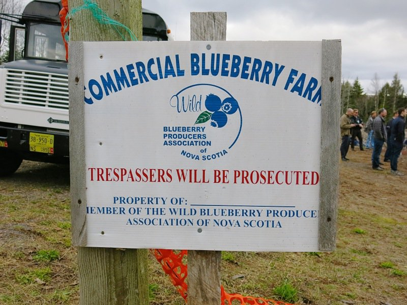 Bonnyman's Wild Blueberries