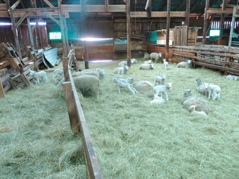 Lismore Sheep Farm and Wool Shop