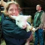 Lismore Sheep Farm and Wool Shop