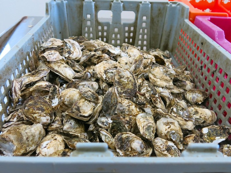 A Fieldtrip to Eel Lake Oyster Farm