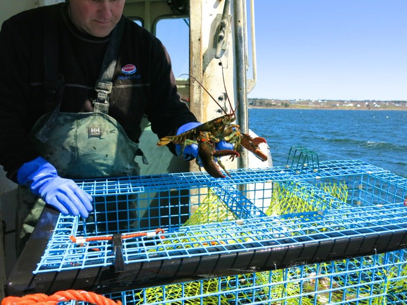 Lobster Fishing in Pubnico