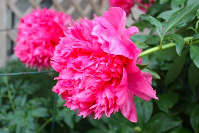 10 Spring Garden zone 3 2013