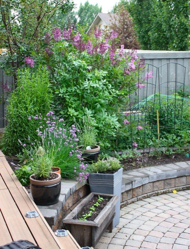 1a Spring Garden zone 3 2013