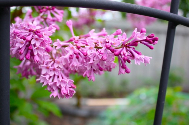 1c Spring Garden zone 3 2013