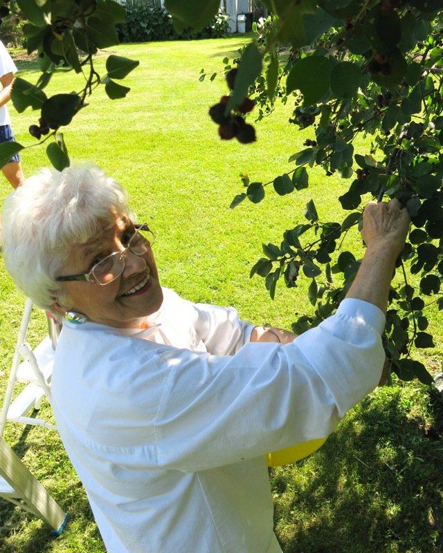 24 Helen McKinney Picking Berries 2014