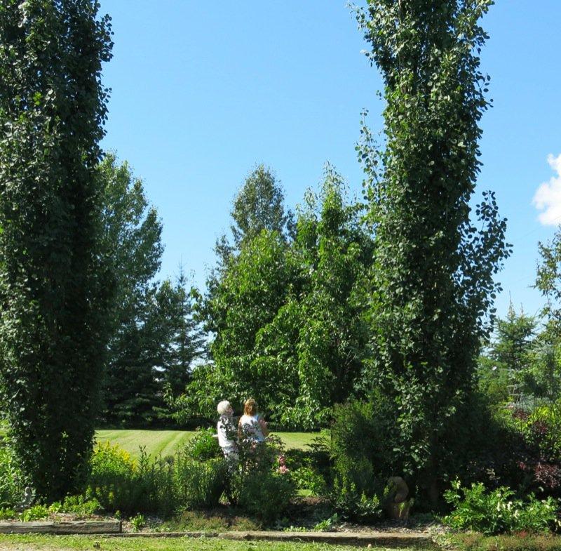 5 Saskatoon Berry Picking