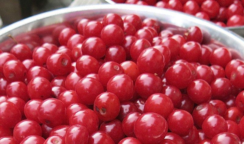 3 Evans Cherry Harvest 2014
