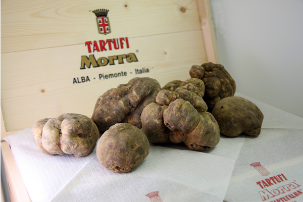 Tartufi Morra