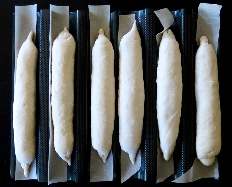 12 Baguettes in Pans after Proofing