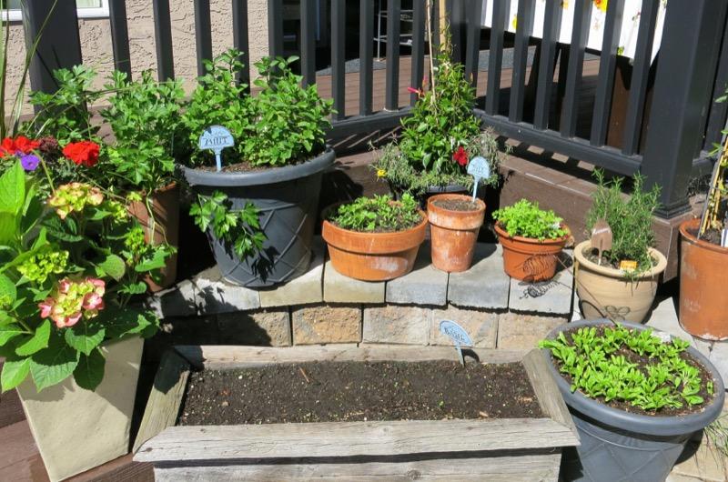 10a Herb Garden B 2016