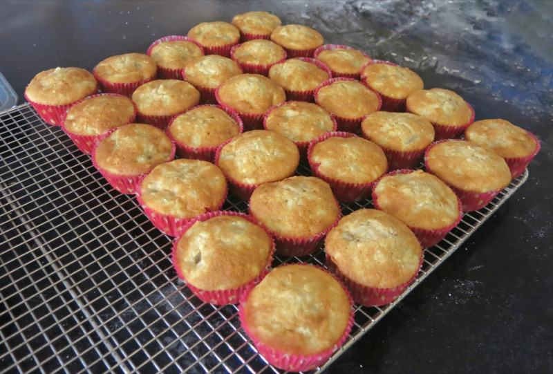 18 Hummingbird Cupcake