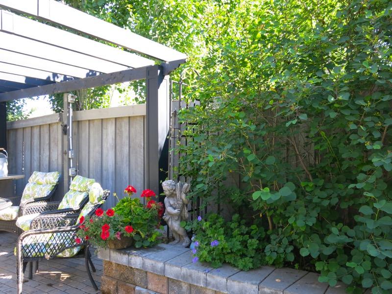 My June Zone 3 Garden 2016 Small Edible Urban Garden