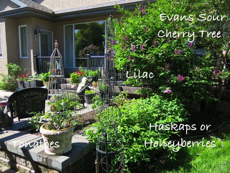 42a Back Yard Side Garden