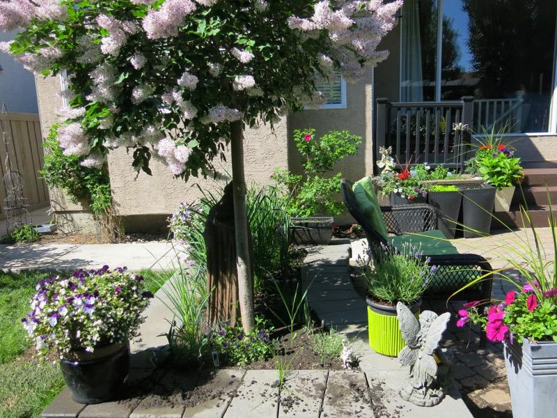 52a Garden June 2016