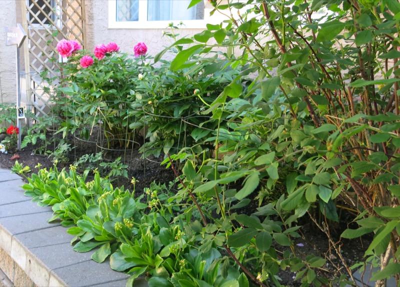 59 Garden June 2016