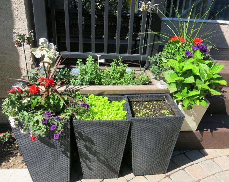 9 Herb Garden A 2016