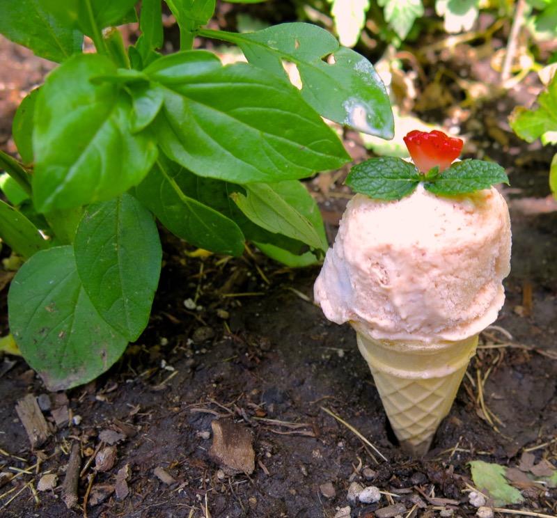 4d Diviant Tutti Fruitti Ice Cream