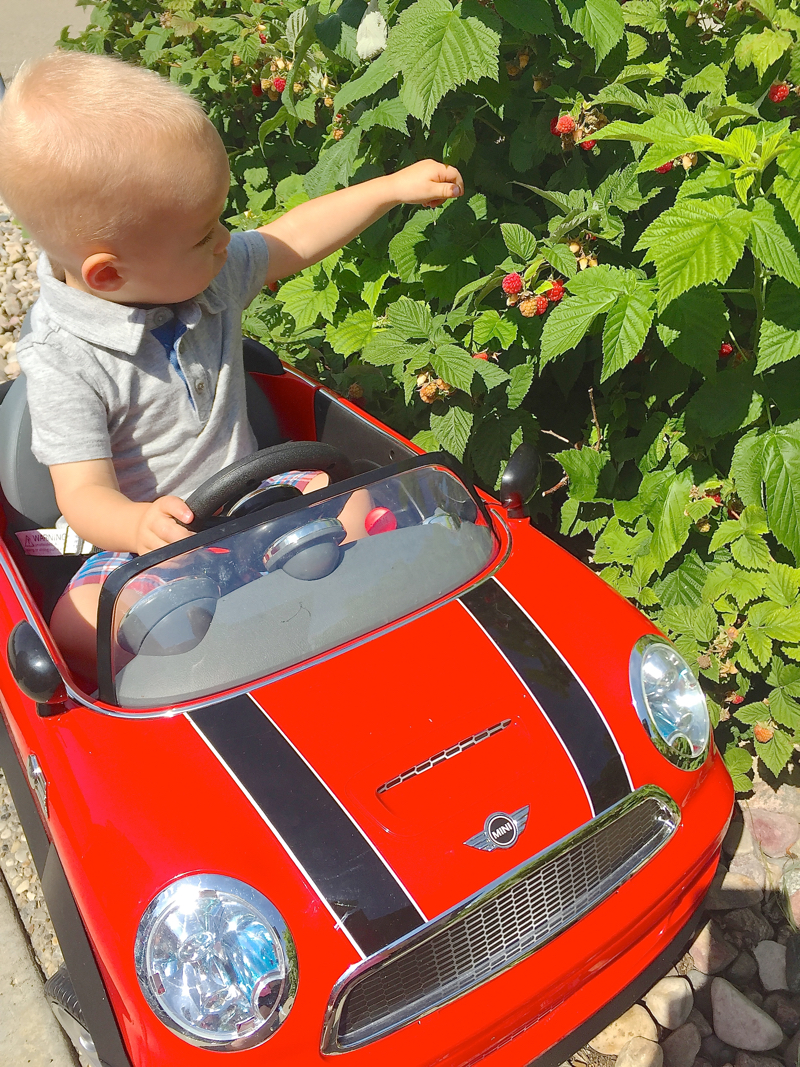 William picking raspberries at Gramsy's