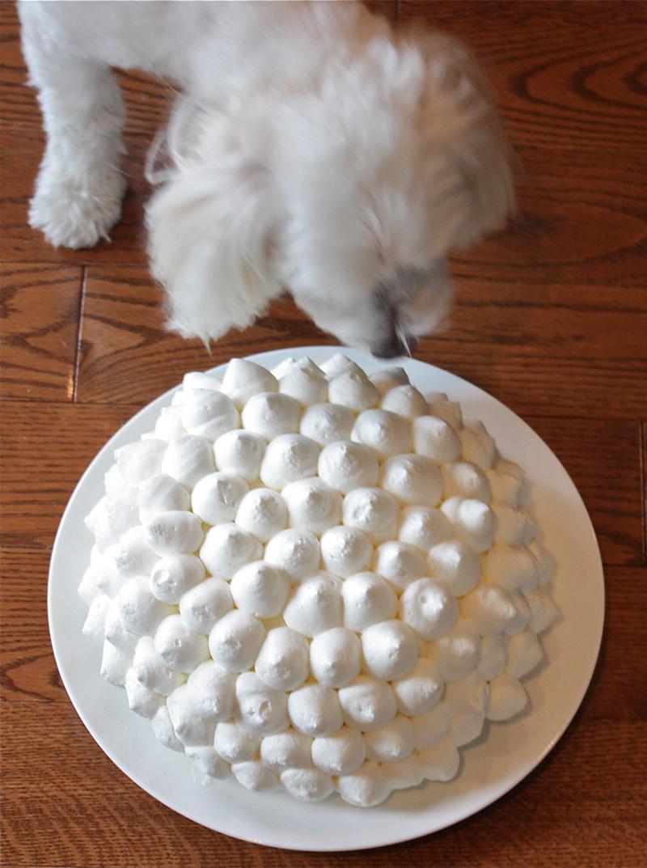 13-pavas-bomba-torta