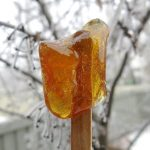 Canadian Maple Syrup Taffy Candy